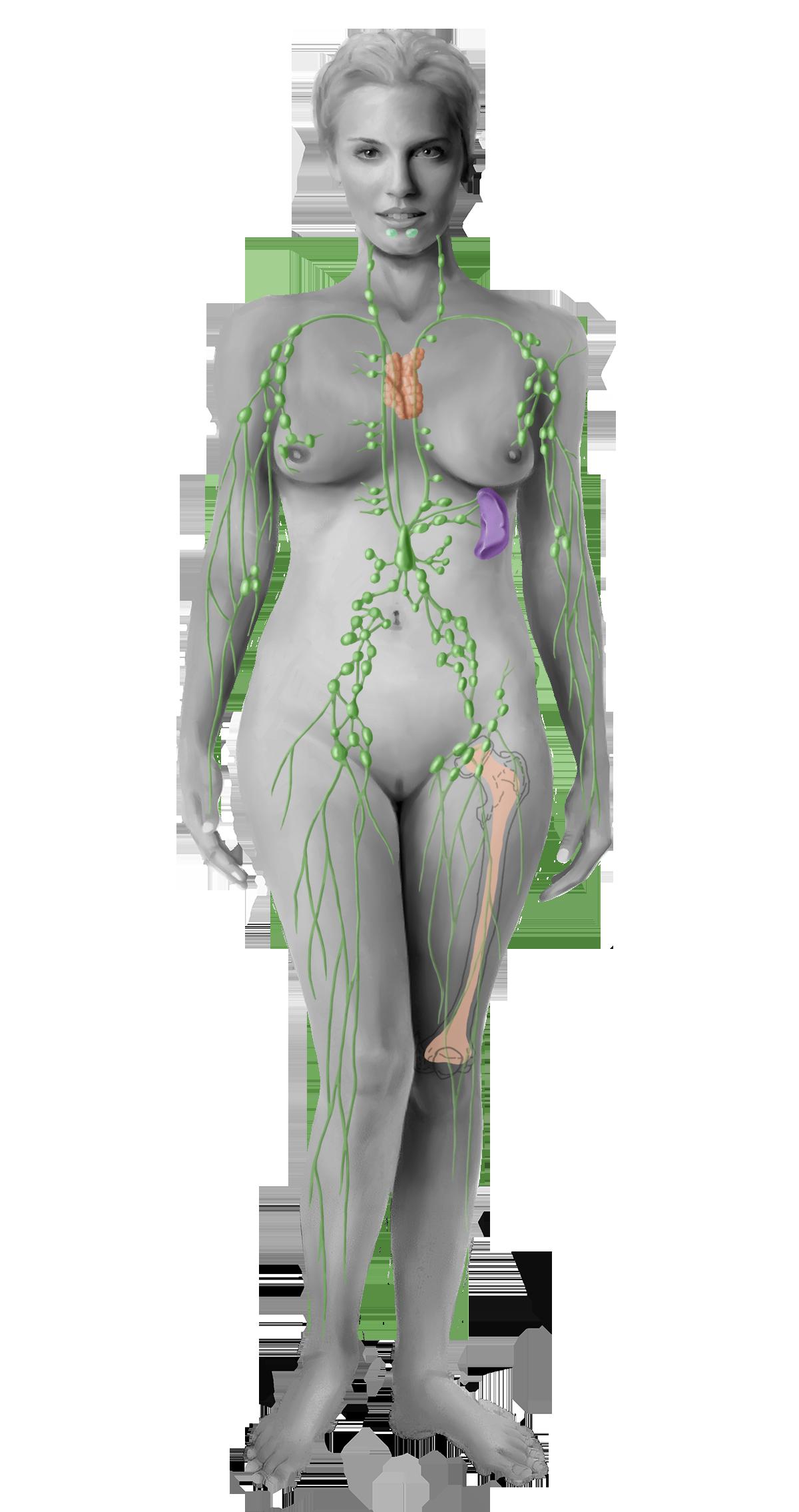 Scheide lymphknoten Knubbel zwischen