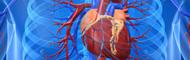Herz-Kreislauf- Herz-Erkrankungen