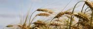 Nahrungsmittel: Allergie, Unverträglichkeit