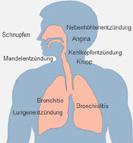 Atemwegserkrankung Anatomie
