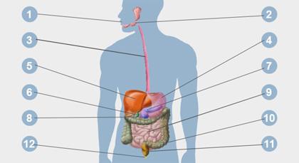 bauchspeicheldrüse verdauungsenzyme